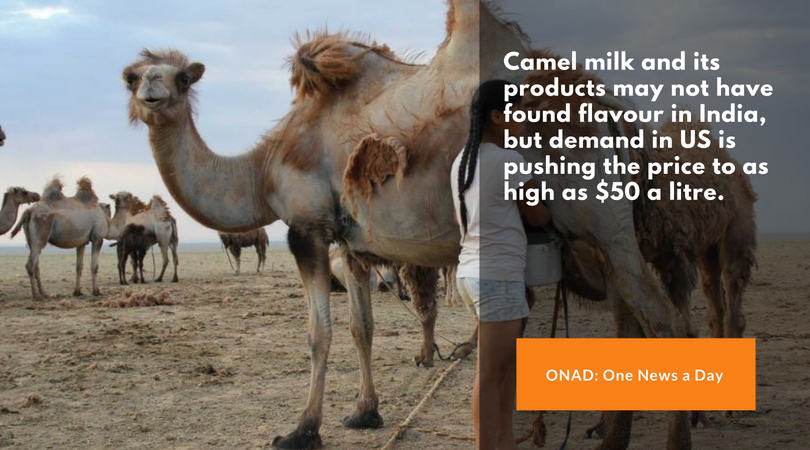 ONAD-Camel milk and its products may not have found flavour in India, but demand in US is pushing the price to as high as $50 a litre.